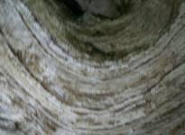 Peschici Gargano giro delle grotte 125